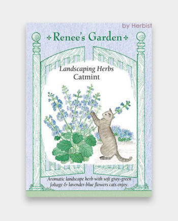 catmint1