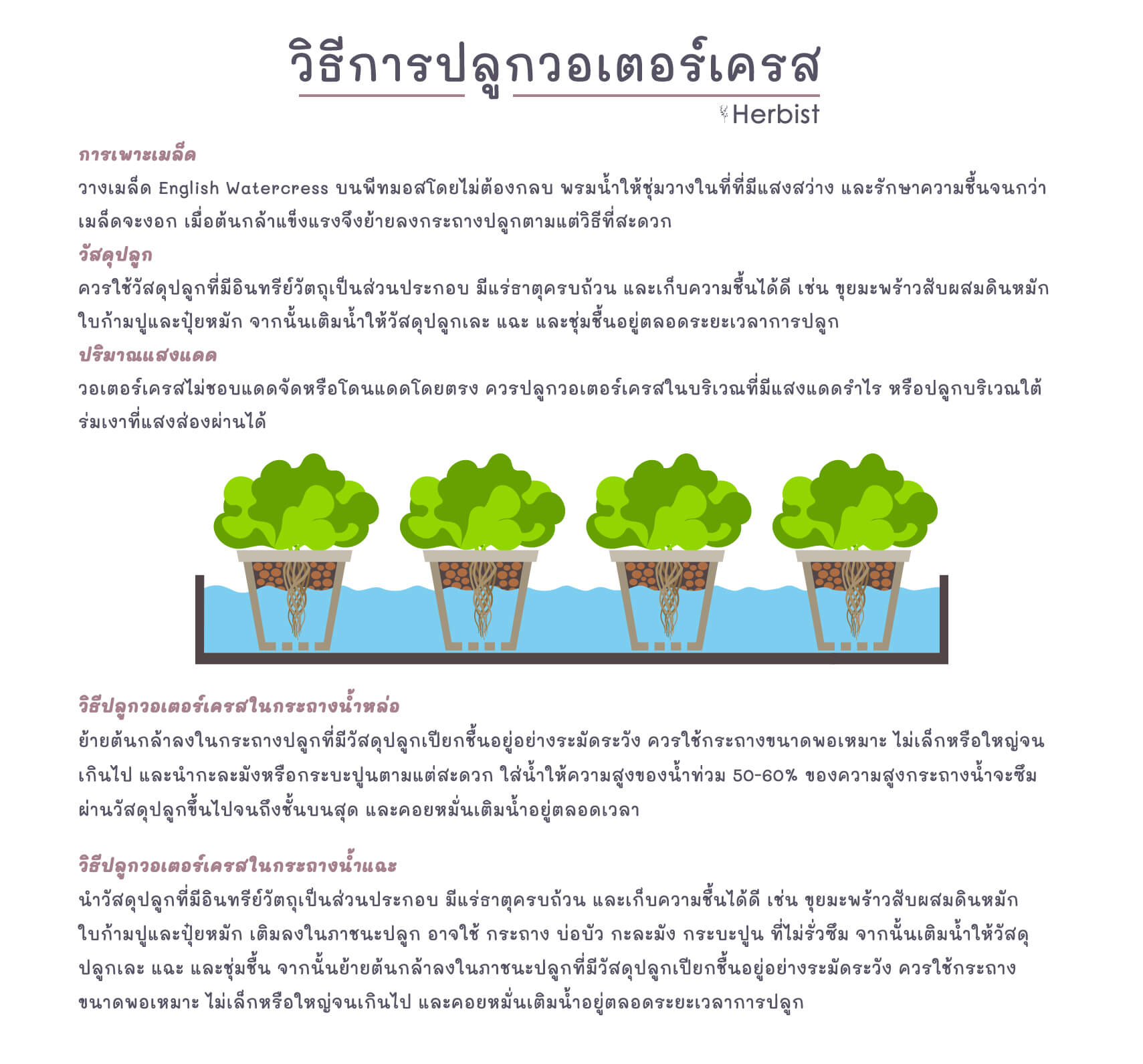 howtogrow_watercress
